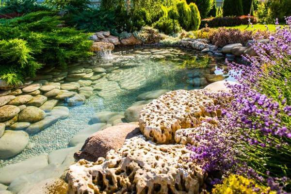 29 Best Water Garden Ideas (Our Favorite + Images) 2020
