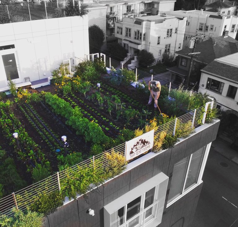 30 Best Rooftop Garden Ideas: Urban Gardens 2020