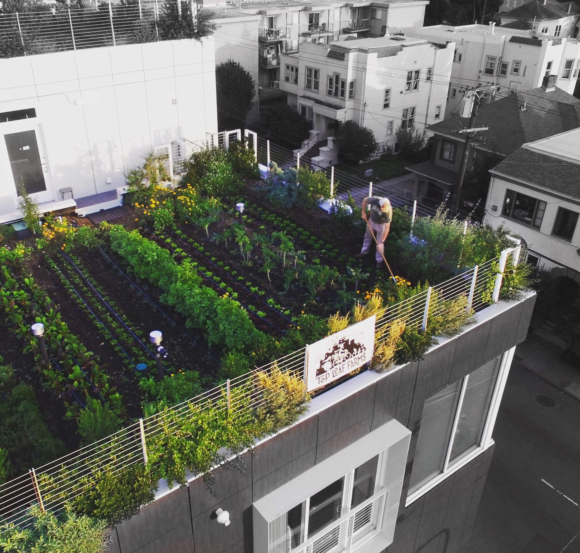 30 Best Rooftop Garden Ideas: Urban Gardens 2020