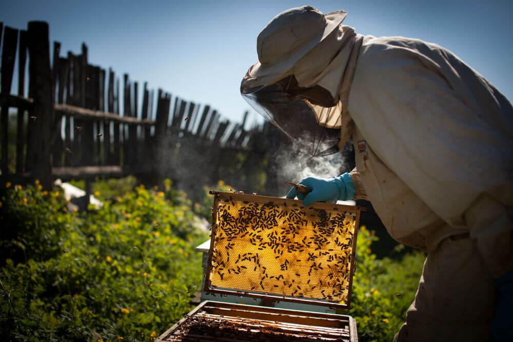Bees in Backyard