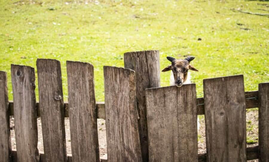 Reclaimed Wood Goat Fence