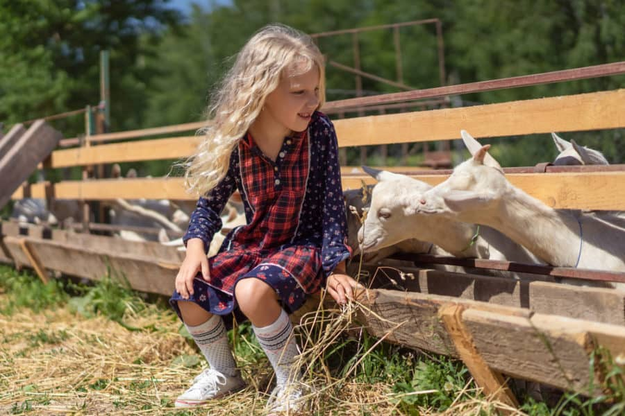 Wooden Slat Goat Fence with food trough
