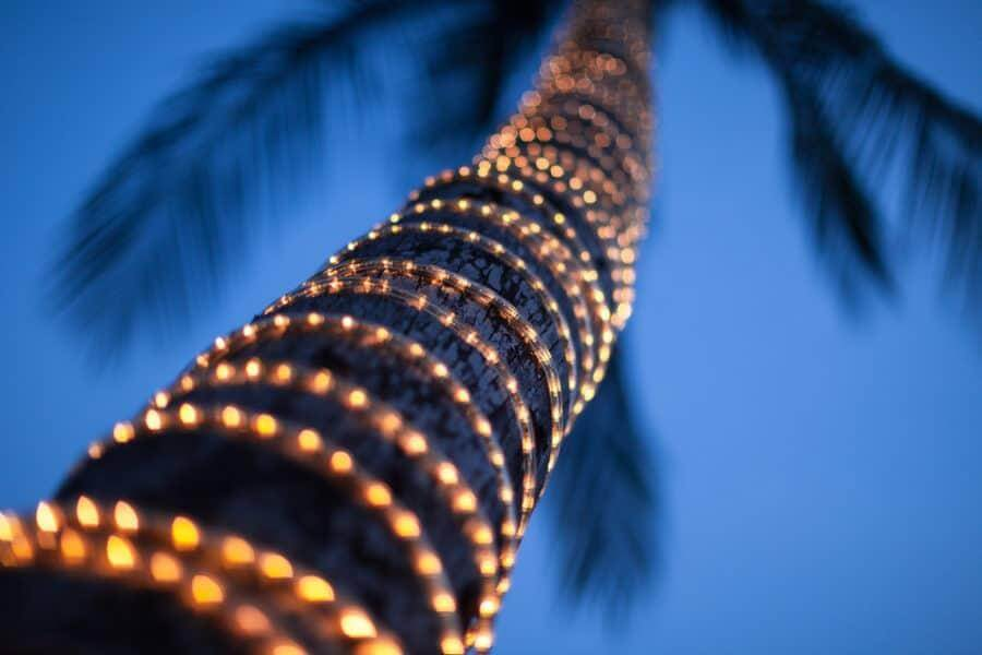 Rope Light around Palm Tree