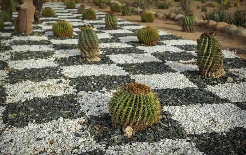 Chessboard Pebbles